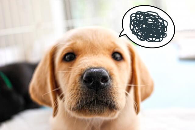犬の困ってる顔の画像